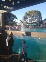 Dolphin at SeaWorld San Diego.