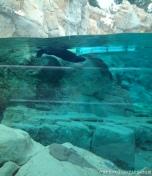 Sea lion at SeaWorld San Diego.