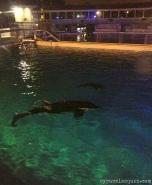 Killer whales at SeaWorld San Diego.