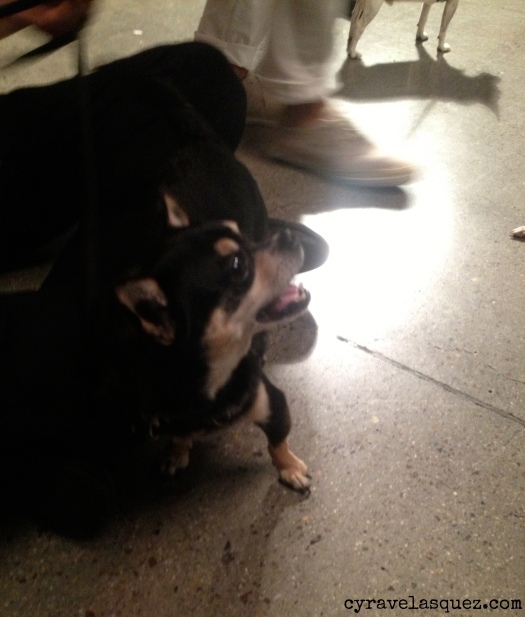 Cyra Velasquez backstage with Rancho Coastal Humane Society dogs at Fashion Week San Diego (FWSD).